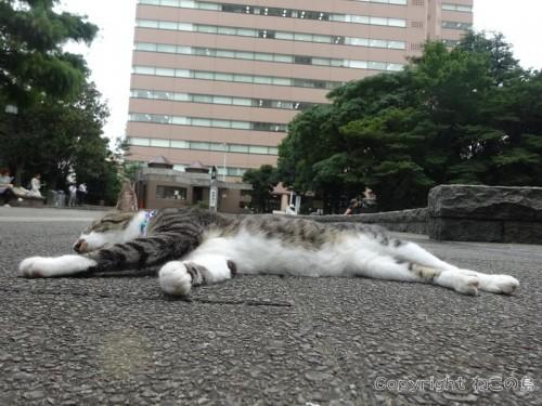 higashiikebukuro-park7