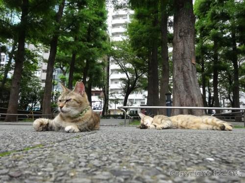 higashiikebukuro-park8