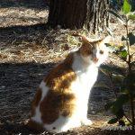 東京でいちばん猫が多い公園 – 大井ふ頭中央海浜公園