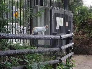 otomeyama-cats004