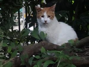 otomeyama-cats005