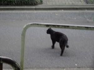 otomeyama-cats008