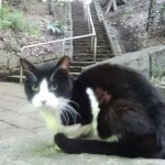 新宿区 おとめ山公園の猫たち