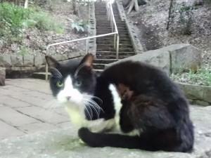 otomeyama-cats011