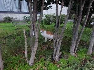 otomeyama-cats013