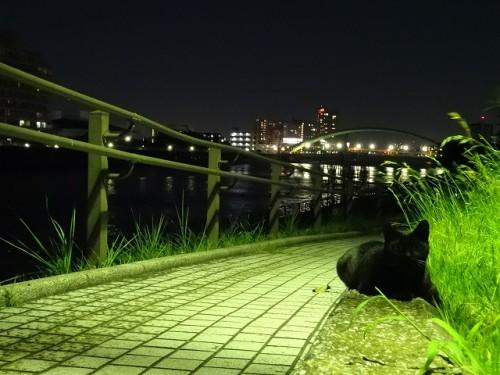 sumidagawa-neko014
