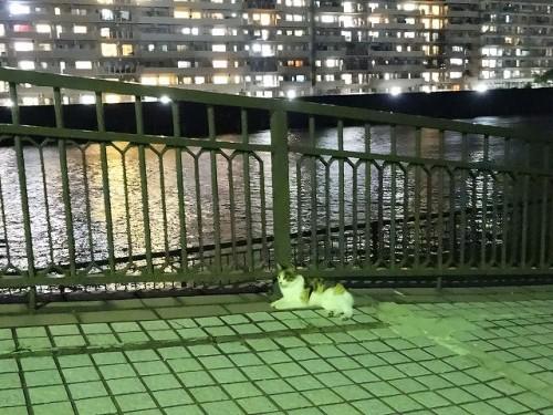 sumidagawa-neko016