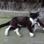 真鍋島の景色『猫の島の景色と猫たち』