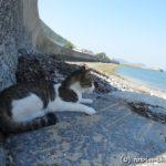 佐柳島の景色と猫たち