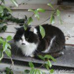 田代島 『猫の島』のアクセス・宿泊・食事など