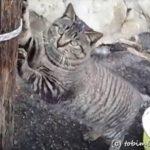 田代島の景色と猫たち