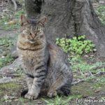 埼玉 彩湖・道満グリーンパークの猫たち