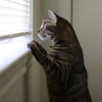 猫とタバコ-受動喫煙の影響