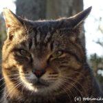鎌倉の猫寺-光明寺の猫