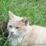 猫100匹の公園 袖ケ浦公園(千葉県)
