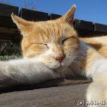 城ヶ島(神奈川県三浦市)の猫たち