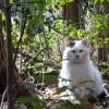 智光山公園(埼玉県狭山市)の猫たち