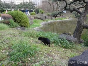 hibiyapark-cats016