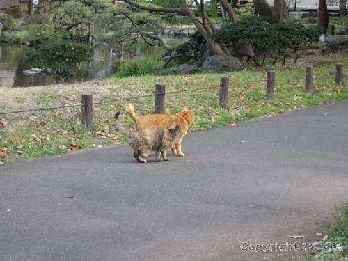 hibiyapark-cats061