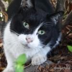 日比谷公園の猫たち