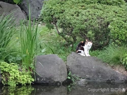 hibiyapark-cats101