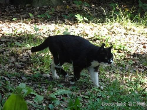 hibiyapark-cats115