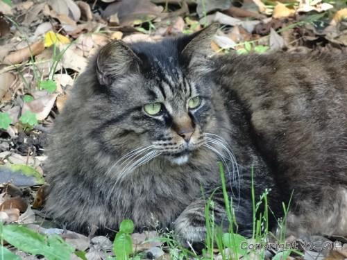 hibiyapark-cats117