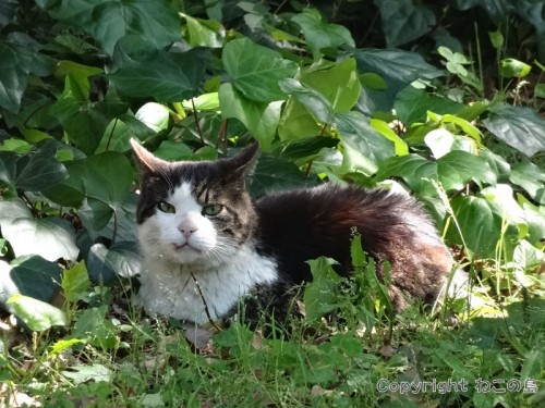 hibiyapark-cats118