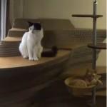 東京の猫カフェ ライブ動画で癒されたい