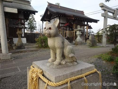 cat-return-home005
