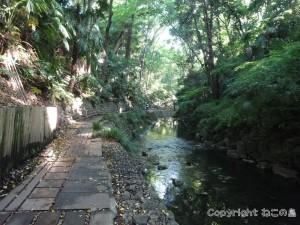 todoroki-valley004