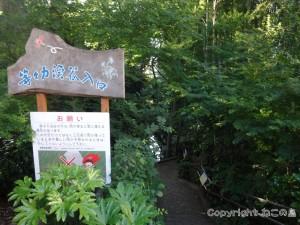 todoroki-valley015