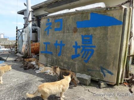 aoshima-cats102