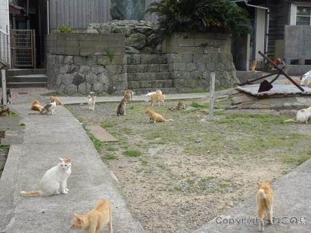 aoshima-cats103
