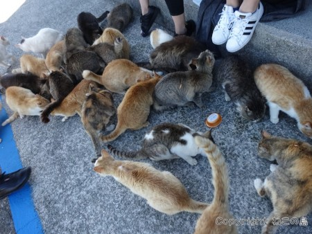 aoshima-cats105