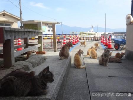 aoshima-cats110