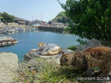 aoshima-cats112
