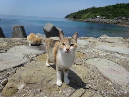 aoshima-cats113