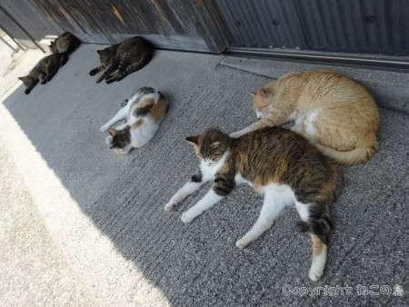 aoshima-cats115