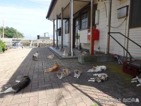aoshima-cats118