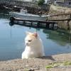 青島の猫たち