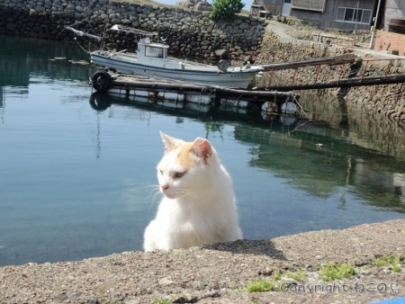 aoshima-cats121