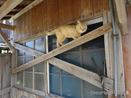aoshima-cats126