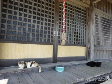 aoshima-cats127