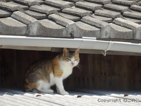 aoshima-cats128
