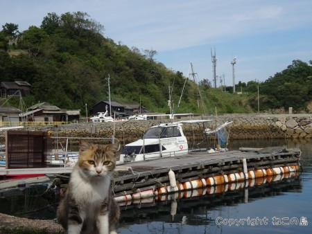 aoshima-cats132