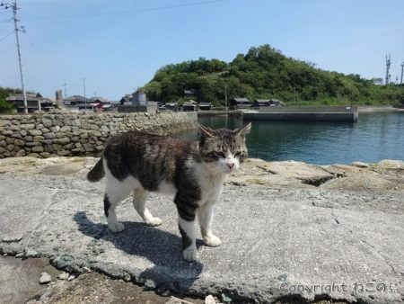 aoshima-cats139
