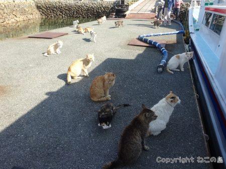 aoshima-cats140