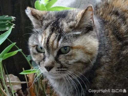 hibiyapark-cats105