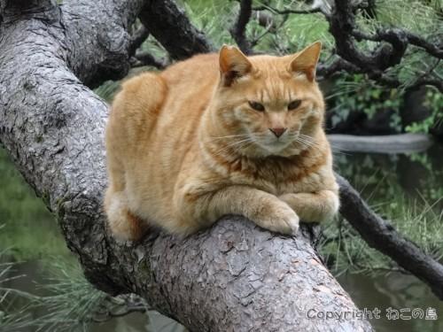 hibiyapark-cats122